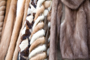 The fur trends for winter of 2018-19