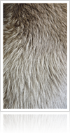 Busting common myths about fur - Thumb